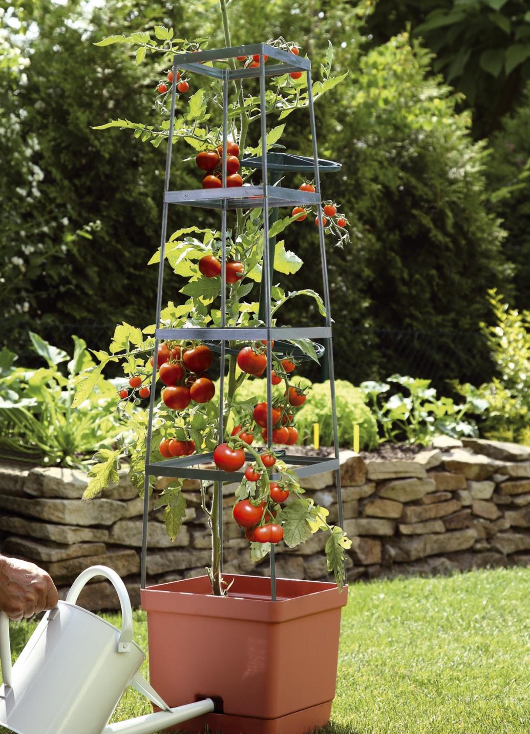 tomaten rankhilfe maxitom in 2 farben rosamunde produkte f r gartenfreunde bader. Black Bedroom Furniture Sets. Home Design Ideas